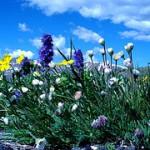 Carol Clifton & SeneGence Welcome Newest Colorado Distributor, Sharon O